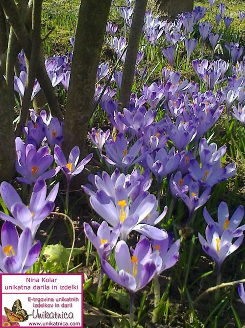 Pomlad in žefrani 2013 Unikatnica